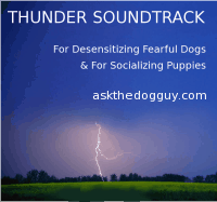 Dog Anxiety Thunder Soundtrack