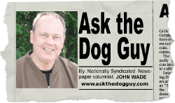 Ask the Dog Guy Column