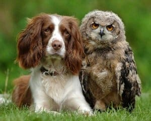 Nosey Dogs Can Find Owls Too