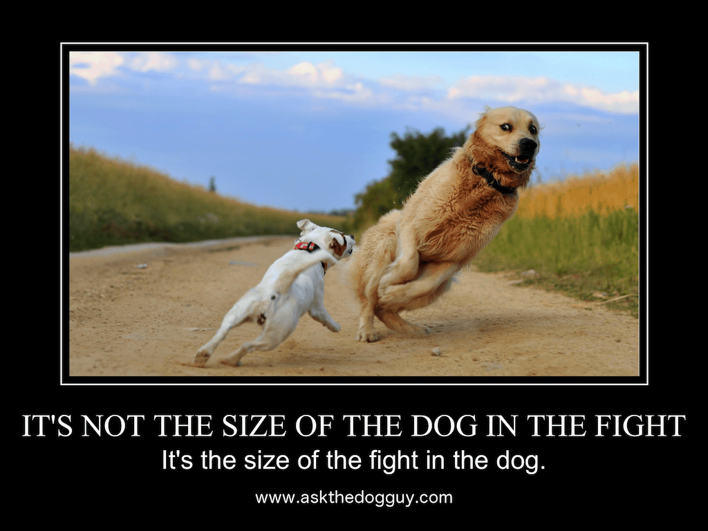 It's not the size of the dog in the fight