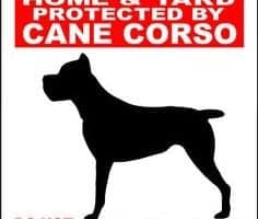 Beware of Cane Corso Dog