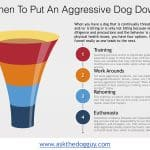 When To Put An Aggressive Dog Down euthanasia euthanize