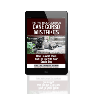 The Five Most Common Cane Corso Mistakes